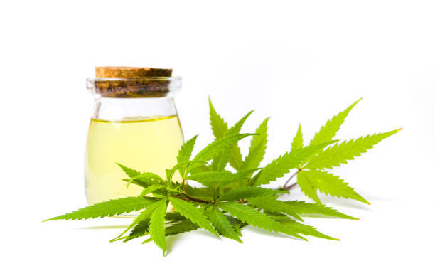The Essence of CBD Oil for Sale